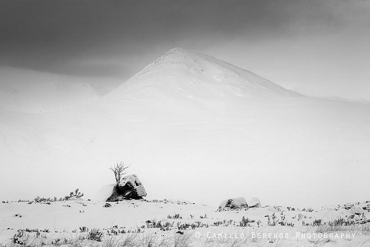 A lone tree on Rannoch Moor with Meall A'Bhuiridh towering high above the wintry landscape