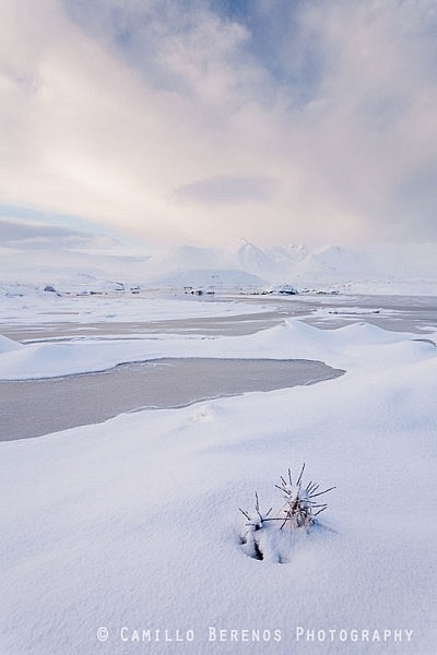 A lone plant peaking through a thick blanket of snow on Rannoch Moor. The rising sun creates some beautiful soft side light revealing the wonderful shapes and textures of this winter landscape