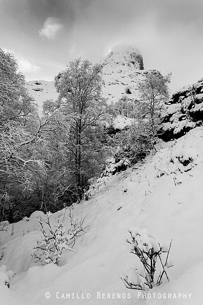 One of the Three Sisters of Glen Coe rising steeply above some snow-covered trees.