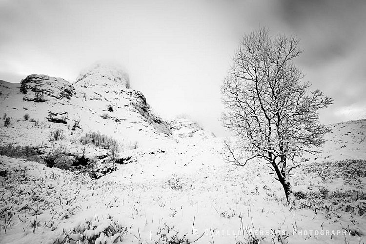 Tree at the foot of the Three Sisters of Glen Coe after some heavy snowfall