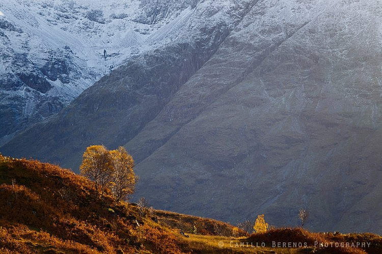 Birches in autumnal colours with the Bidean nam Bian as a backdrop